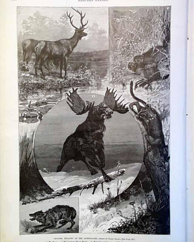 WILDLIFE MOOSE ELK BEAVER PANTHER WOLF OF THE ADIRONDACKS WOLVERINE WILDLIFE